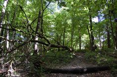 I love hiking nature trails. This is  a trail at Mounds State Park.