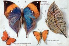 Postcards of the Past - Vintage Postcards of Butterflies