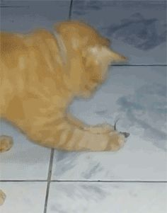 Mouse Plays Dead.gif