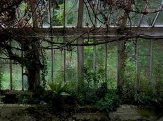 Overgrown Greenhouse