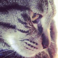 Prettyyyyy Cat:)