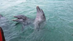 The sweetest dolphins