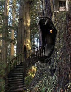 I'm dreaming my life — bluepueblo: Tree House Stairway, The Enchanted...
