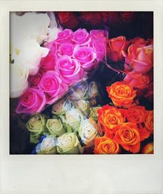 farmers market roses