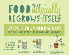 True Blue Me & You: DIYs for Creatives — 16 Foods That Regrow Themselves Infographic from...