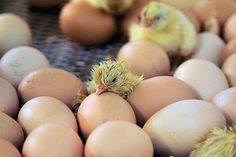 40 Hatching Animal Pictures 25