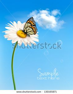 Nature spring daisy flower with butterfly.  Vector illustration.
