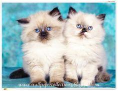 Cute Cats. | Pets
