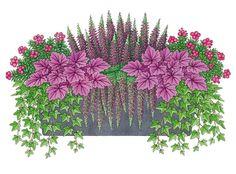 2 x Fruchtmyrte (Pernettya mucronata) 2 x Knospenblütenheide (Calluna vulgaris) - Pflanzideen Window Boxes Summer, Window Box Flowers, Container Flowers, Container Plants, Container Gardening, Potted Plants, Indoor Plants, Horticulture, Dollar Tree Gifts