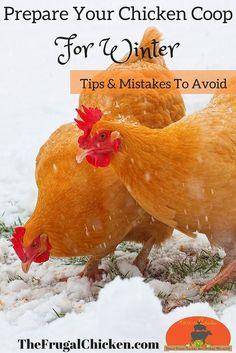 Great tips to prepare your chicken coop for winter #meyerhatchery