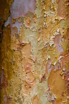 Peeling yellow and peach paint