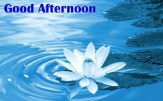 Good Afternoon Images Pictures For Whatsapp Good Afternoon In Spanish, Good Afternoon Images Hd, Good Afternoon Post, Good Afternoon Quotes, Good Night Quotes, Good Morning Picture, Morning Pictures, Afternoon Messages, Good Evening Greetings