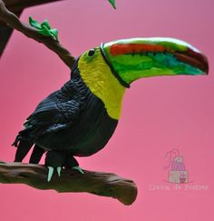 """Tucan """"Animals Rights Collaboration"""" - Cake by Lluviadepostres Edible Art, Animal Rights, Amazing Cakes, Collaboration, Sculpting, Bird, Animals, Ideas, Pom Poms"""