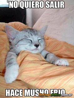 No quiero salir hace frio