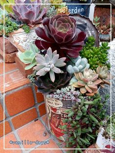 Succulent Terrarium, Succulent Plants, Planting Succulents, Garden Projects, Projects To Try, Succulents In Containers, Fungi, Garden Art, Container Gardening