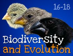 FREE Teaching resources for 16-18 year olds: Biodiversity and Evolution – Darwin's Finches Explore the importance of biodiversity and how observing variation in the beak shape of Galapagos finches helped Darwin to formulate his theory of natural selection. http://www.arkive.org/education/teaching-resources-16-18#resourceBiodiversityAndEvolutionDarwinsFinches2