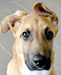 Zeus- Energetic, active guy, looking for that perfect active home!   Click on Zeus's picture to find out more information.