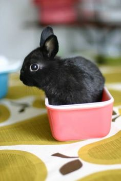 For Stephanie ~  there's a hare in your cup!!! And, is it ever cute! <3 <3