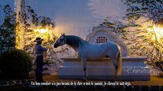 Un bon cavalier n'a pas besoin de le dire à tout le monde, le cheval le sait déjà.
