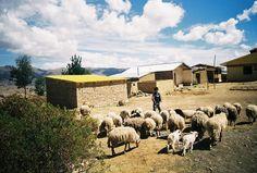 Jironkota, Bolivia.