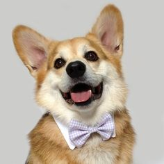 All Creatures Great and Small: The Dapper Gentleman