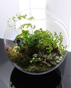 A lovely fishbowl terrarium, using items we can find in our own backyard!