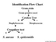 identification of bacteria essay Sample health social care essay microbial pathogen identification methods health and were investigated for bacterial identification by both.