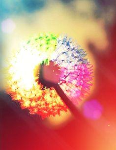 Lol Eva it reminds me of when we lit dandelions on fire!!