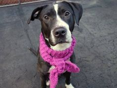 SAFE 03/25/15!  Was TO BE DESTROYED - 03/25/15 Manhattan Center -P  My name is DIAMOND RING. My Animal ID # is A1030038. I am a spayed female black and white am pit bull ter mix. The shelter thinks I am about 4 YEARS old. For more information on adopting from the NYC AC&C, or to find a rescue to assist, please read the following: http://urgentpetsondeathrow.org/must-read/