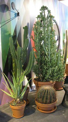 Woonbeurs 2013: Cactussen all over. O.a. in het woonhuis van More Than Classic en Eigen Huis  Interieur.