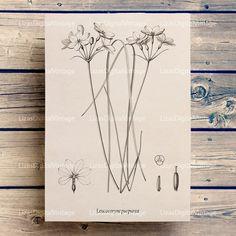 Printable botanical art, Print download, Floral wall art, Botanical chart, Wall art printable, Botanical illustration, A3 PNG JPG 300dpi