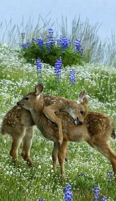 Fawn hug...