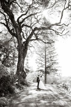 Beautiful giant tree.  After the Ceremony.  Bride & Groom.  Sunshine on trail.  Outdoor portraiture. Adeline & Grace Photography