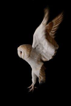 (Robin Lowry) Wings of an Angel