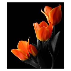 Tulips by sking243 ❤ liked on Polyvore featuring art, backgrounds and flowers