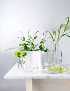 In Alvar Aalto created his classic series of glass vases. The Alvar Aalto Collection has been a staple of modern Scandinavian design and the most ico. Alvar Aalto, Cactus Plante, Green Plants, Scandinavian Design, Modern Interior, Indoor Plants, Interior Inspiration, House Plants, Vases