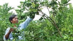 Tạo hiệu quả kinh tế nhờ tích cực chuyển đổi cây trồng