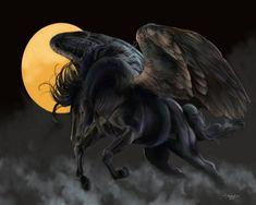 Pegasus preto