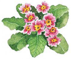 by susan branch Watercolor Cards, Watercolor Flowers, Watercolor Paintings, Watercolours, Branch Drawing, Branch Art, Susan Branch Blog, Painting Inspiration, Flower Art