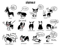 "Body language & calming signals poster (18"" x 15"") by Lili Chin on Flickr #dog #body_language #boston_terrier #illustration #poster #lili_chin #flickr"