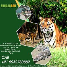 It's Makes a big difference in life when you stay positive. Great Egret, #Sundarban #National #Park. Suraj Das Mob :- 9932780889. visit: www.sundarbannaturetour.com