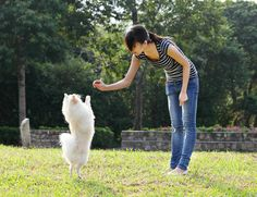 """""""Because reward-based methods are associated with higher levels of obedience and fewer problematic behaviours, we suggest that their use is a more effective and welfare-compatible alternative to punishment for the average dog-owner."""" Hiby et al 2004 Dog Training Books, Best Dog Training, Training Online, Training Classes, Training Videos, Teach Dog Tricks, Dog Clicker Training, All Small Dog Breeds, Cute Little Dogs"""