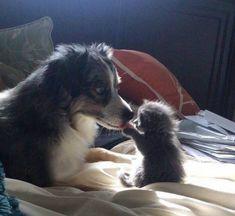 Kitten reads tongues. (Source: http://ift.tt/2odo197)