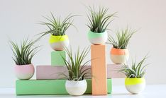6 Houseplants That Will Survive Your Busy Schedule - The Accent™