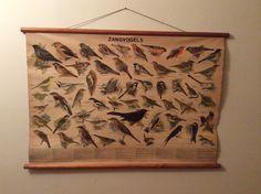 Wandplaat zangvogels