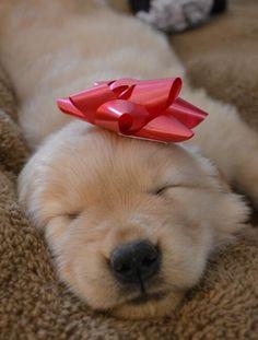 Puppy Present :D