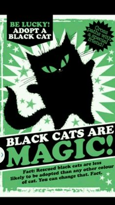 Is this not the strangest thing? People are weird. Lots of lovely black cats in my extended family.