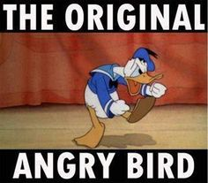 Angra bird!