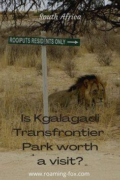 Going to the Kgalagadi and being there has its challenges but there are rewards. Are they worthwhile? #Kgalagadi #safari #selfdrive #remote #sandroads #desertconditions #wildlife #predators #raptors #lion #cheeta #leopard #birdsofprey Fox Facts, Self Driving, Beautiful Places In The World, Photo Essay, Raptors, What You Can Do, Travel Goals, Storytelling, Vip