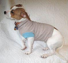 Cagnolino di Kris con il vestitino nuovo
